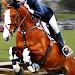 Download Horse Simulator 1.5 APK