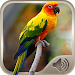 Download Bird Sounds 5.0 APK
