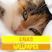 Download Calico Cat Wallpaper 2.0 APK