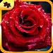 Download Flower Puzzles 1.0.5 APK