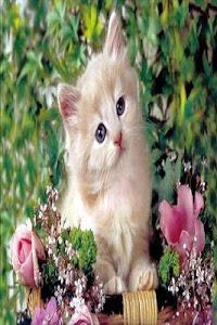 Download Kittens 1.0 APK