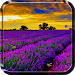 Download Lavender Live Wallpaper 4.0 APK