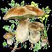 Mushrooms app
