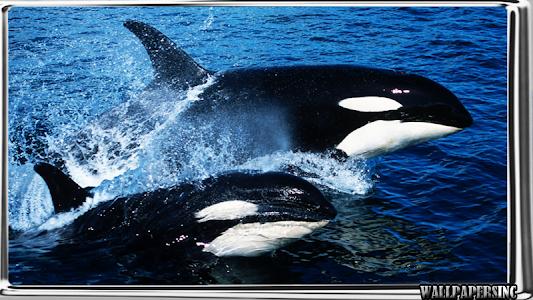 Download Orca Wallpaper 10 APK