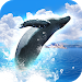 Download REAL WHALES Find the cetacean. 1.0.7 APK