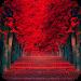 Download Red Leaves Live WallPaper 1.4 APK
