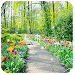 Download Spring Garden Wallpaper 1.0 APK
