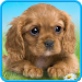 Download Talking puppy 1.480.0.527 APK