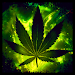 Download Weed Rasta Keyboard 2.2 APK