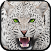 Download Wild Snow Leopard Survival Sim 1.2 APK