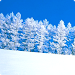 Download Winter Snow Live Wallpapers 1.0 APK